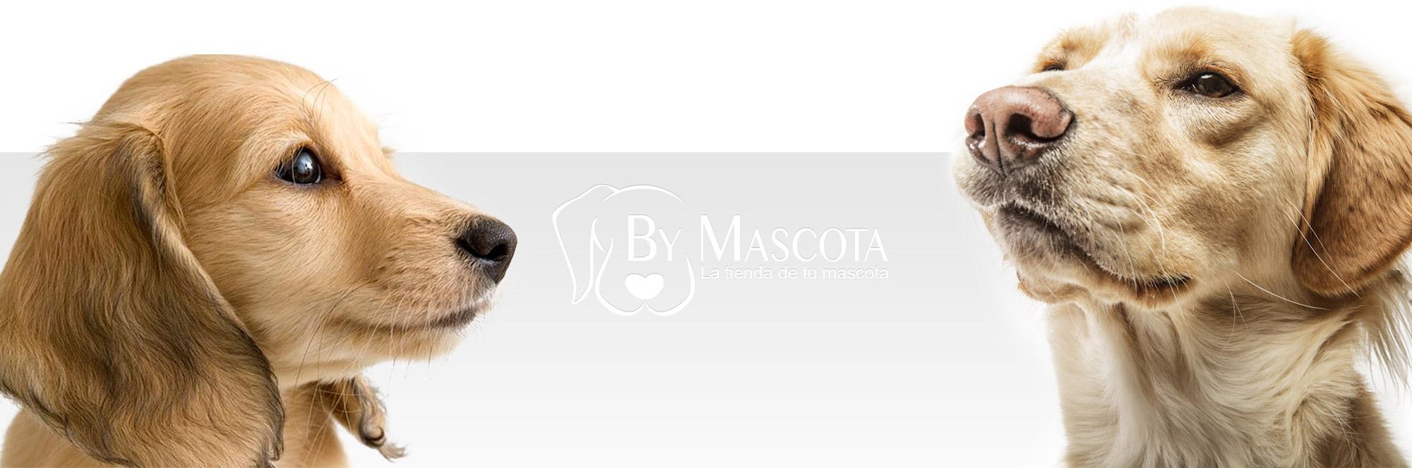 ByMascota- La franquicia de animales domesticos
