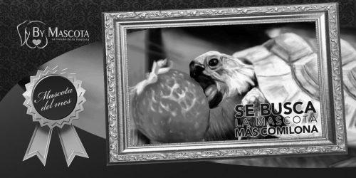 2017-06-14-mascotas-bm-mas-comilona-byn