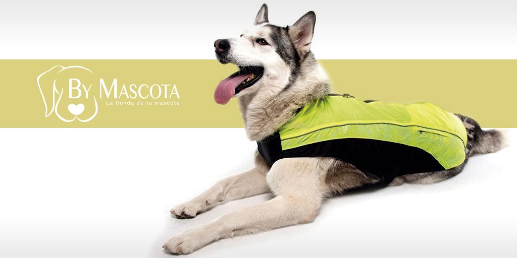 chubasqueros para perros - ByMascota