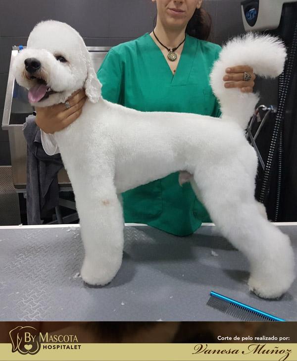 Peluqueria canina Hospitalet del Llobregat