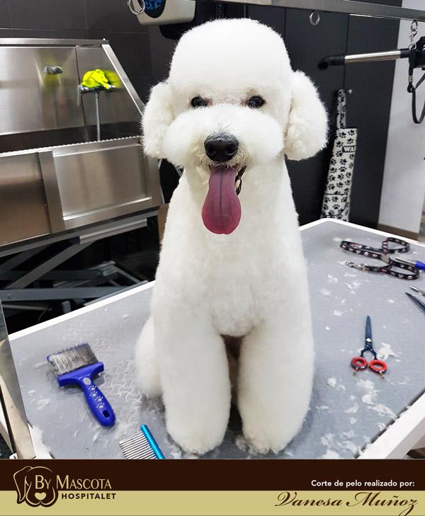 Peluqueria canina Hospitalet