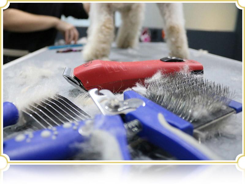 Curso Iniciación Peluquería Canina