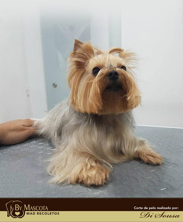 Peluqueria canina Madrid Salamanca