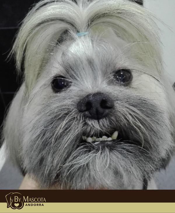 Peluquería canina By Mascota Andorra